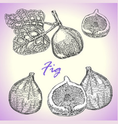collection of highly detailed hand drawn fruit vector image