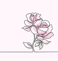 drawing of beautiful pink rose flower vector image vector image