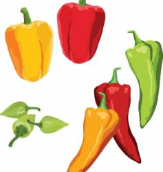 peppers vector image vector image