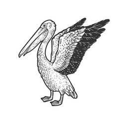 pelican bird sketch vector image