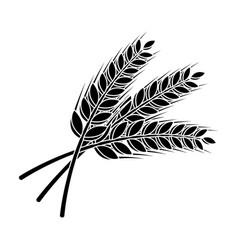 Sprigs wheat plant for brewing beer pub vector