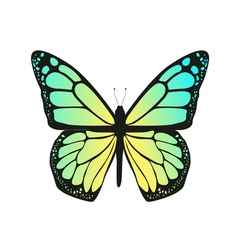 The butterfly with blue wings vector image
