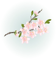 Sakura cherry branch pink flower with leaves vector image