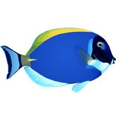 Angelfish3 vector