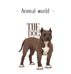 animal world the dog pit bull terrier background v vector image