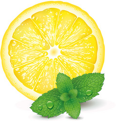 Lemon and mint on white background vector