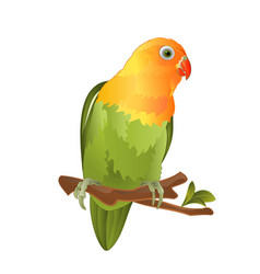 Parrot agapornis lovebird tropical bird vector