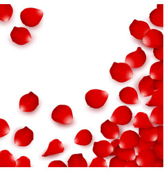 red rose petals valentines solated vector image