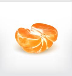 Ripe half tangerine vector