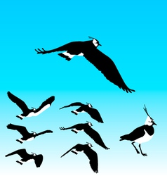 Flying Plover Sequence vector image vector image