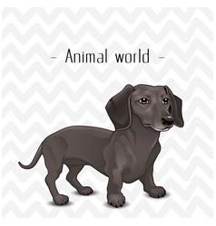 animal world the dog dachshund background i vector image