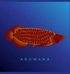 Beautiful red arowana fish vector
