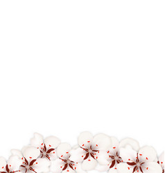 blooming sakura flowers blossom isolated vector image