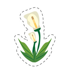 Cartoon calla lily flower image vector