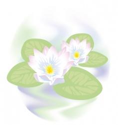 lotus flowers in water vector image