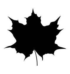 maple leaf silhouette icon black color vector image