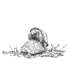 Two mating turtles drawing hand drawn sketch vector