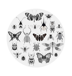 monochrome butterfly and bug collection vector image
