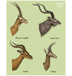 Antelopes greater kudu gazelle thompsons dibatag vector