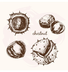 Chestnuts vector image