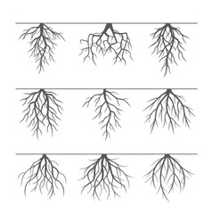 Collection of grey roots vector