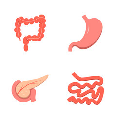 digestive system icon set in flat style vector image