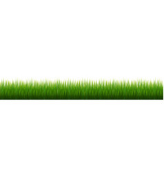 Grass border white background vector