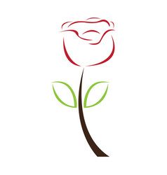 isolated abstract rose flower vector image
