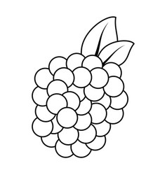 Isolated sweet blackberry vector