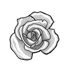 Single rose flower vector