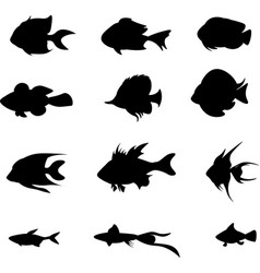 set black fish isolated on the white vector image vector image