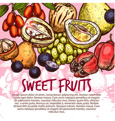 exotic fruit or sweet tropical berry sketch poster vector image