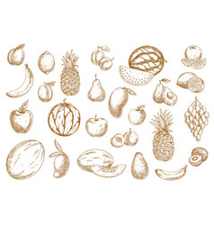 fruits sketch food icons tropical exotic isolated vector image
