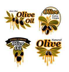olive oil icons set of olives vector image