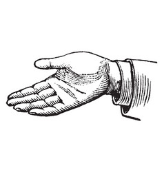 this picture represents the hands simple vector image