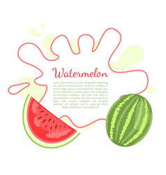 watermelon citron melon berry ripe tropical fruit vector image