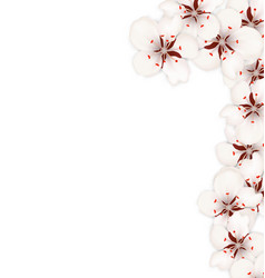border made in sakura flowers blossom isolated on vector image