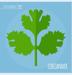 coriander flat design icon vector image vector image