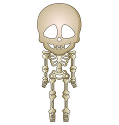 Cartoon skeleton vector