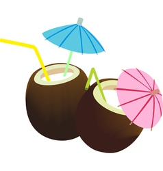 coconut juice vector image