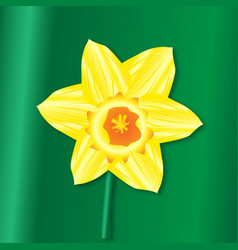 Daffofil saint davids day vector
