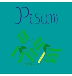 Flat on background natural pisum vector