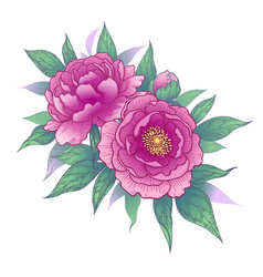 hand drawn floral bunch with pink peony flowers vector image