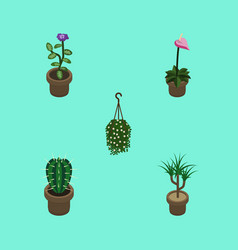 Isometric flower set of flower houseplant grower vector