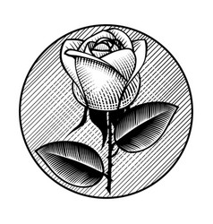 Round retro icon and label with white rose vector