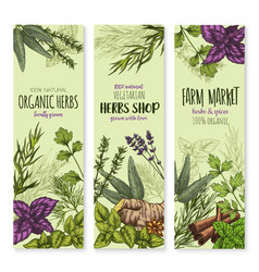 Spices and herbs banners set vector