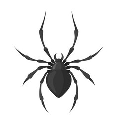 Spider black icon spooky creepy insect symbol vector