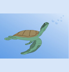 turtle swims under water vector image
