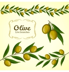 Collection of olive branch green olives vector image
