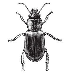 Agonoderus vintage vector